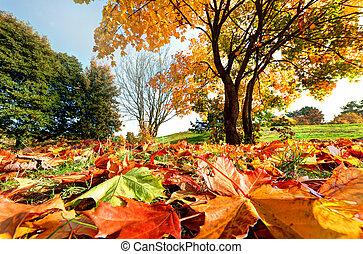 ősz, liget, táj, bukás