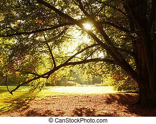 ősz, nap, fényes, bitófák, színes