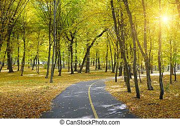 ősz, nap rays, liget
