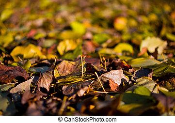 ősz, nap, zöld, este, színes
