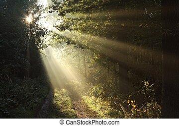 ősz, napkelte, erdő