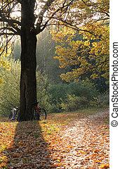 ősz, napnyugta