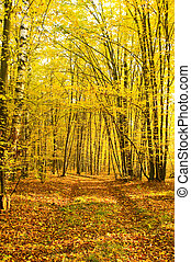 ősz, napsugarak, erdő, önt
