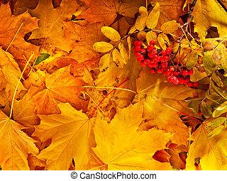 ősz, narancs, csoport, leaves., háttér