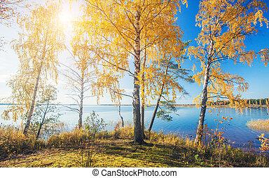 ősz, park., őszies, bitófák, tó