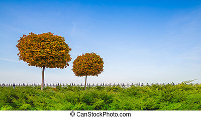 ősz, park., juharfa, bitófák