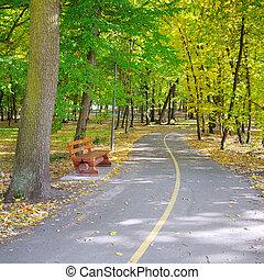 ősz parkosít, alatt, egy, gyönyörű, liget