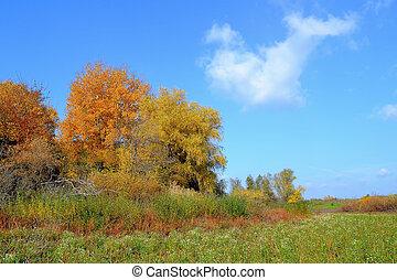 ősz parkosít