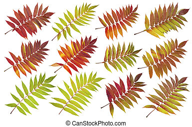 ősz, repülés, állhatatos, horgol