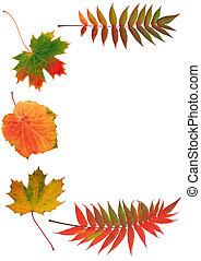 ősz, szépségek