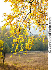 ősz, színes