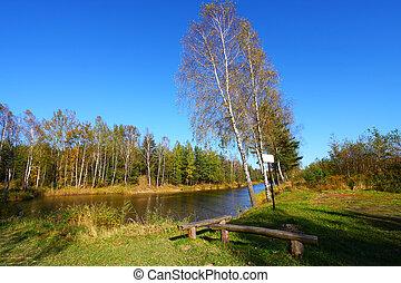 ősz, színes, tó, táj