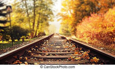 ősz, színes, zöld, lefelé, sín, esés, vasút
