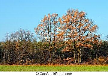 ősz, táj
