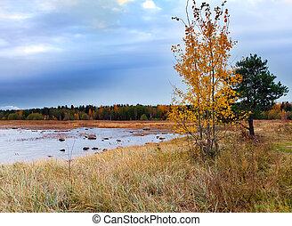 ősz, tó, táj