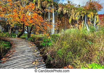 ősz, természetjáró, látványos, erdő, plitvice, tavak, horvátország, színes, gyalogjáró