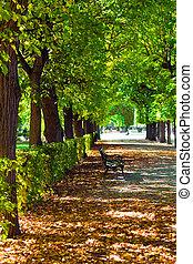 ősz, városi park, nap