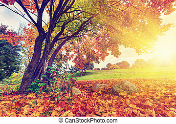 ősz, zöld, bukás, színes, liget