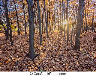 őszies, park., ősz fa, és, zöld