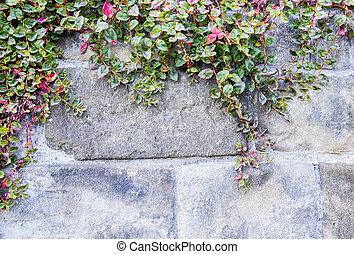 ściana, kamień, winorośl