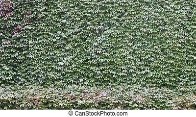 ściana, zielony