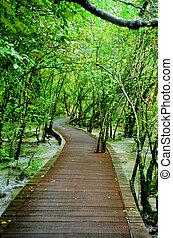ścieżka, jezioro