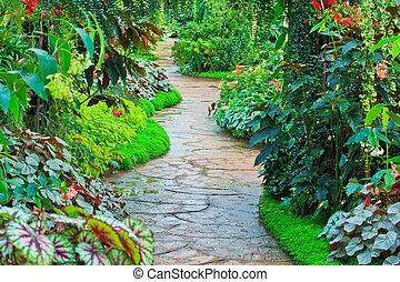 ścieżka, kwiat ogród