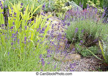ścieżka, kwiaty, angielski ogród, lawenda