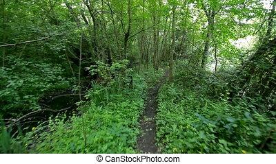 ścieżka, las, pieszy