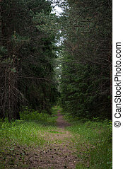ścieżka, las