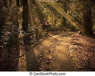 ścieżka, nasłoneczniony