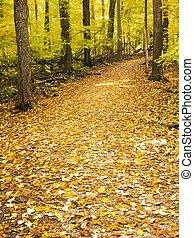 ścieżka, przez, las