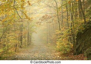 ścieżka, w, mglisty, autumn las