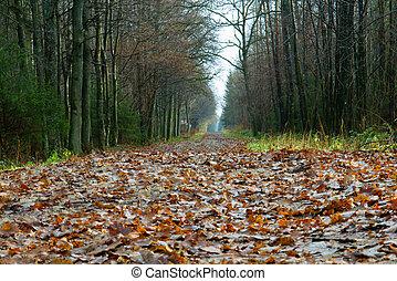 ścieżka, w, przedimek określony przed rzeczownikami, las