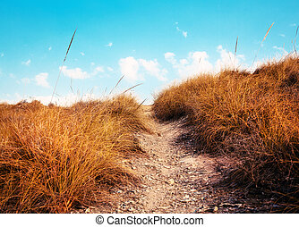 ścieżka, w, przedimek określony przed rzeczownikami, niebo