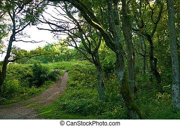 ścieżka, w, przedimek określony przed rzeczownikami, woods.