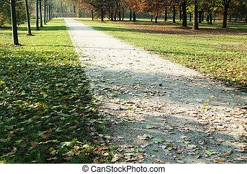 ścieżka, w, przedimek określony przed rzeczownikami, zielony