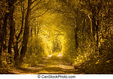 ścieżka, w, złoty, las