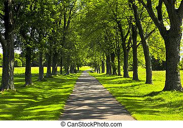 ścieżka, w, zielony park