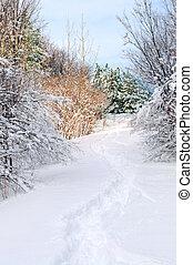 ścieżka, w, zima, las