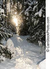 ścieżka, zaświecić, przez, przedimek określony przed rzeczownikami, umieszczenie słońce, w, przedimek określony przed rzeczownikami, zima, forest.