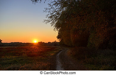 ścieżka, zachód słońca, las