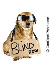 ślepy, pies