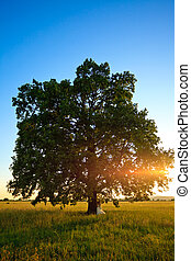 ślub, drzewo
