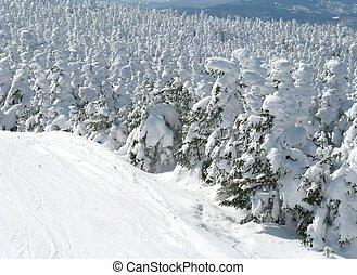 śnieżny, drzewo, szczyty