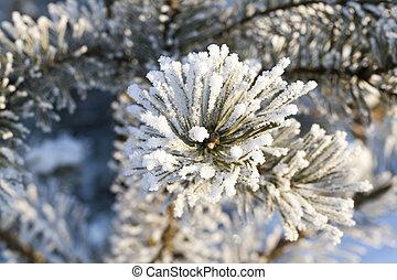 śnieg, cele, w, zima