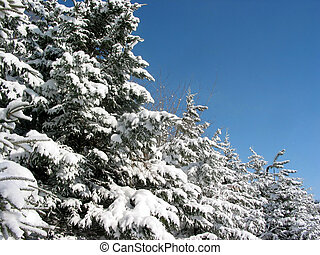 śnieg, drzewa, zima