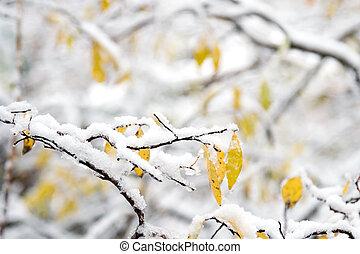 śnieg, i, zima krajobraz