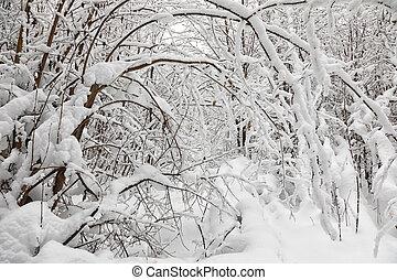 śnieg nakrył drzewa, w, przedimek określony przed rzeczownikami, zima, las