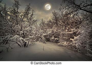 światło księżyca, noc, zima, drewno